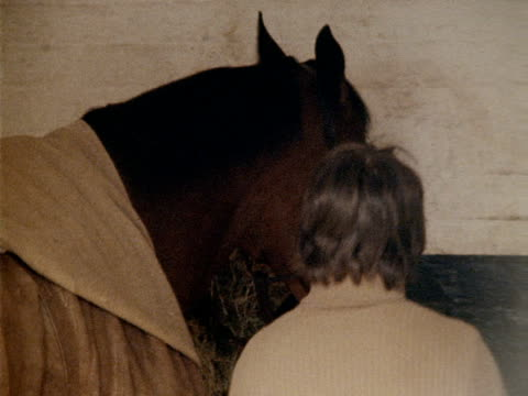 stable hand checks on red rum. - pferdeartige stock-videos und b-roll-filmmaterial