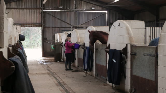 MS Stable hand feeding horses in stables / Helland, Bodmin, Cornwall, United Kingdom
