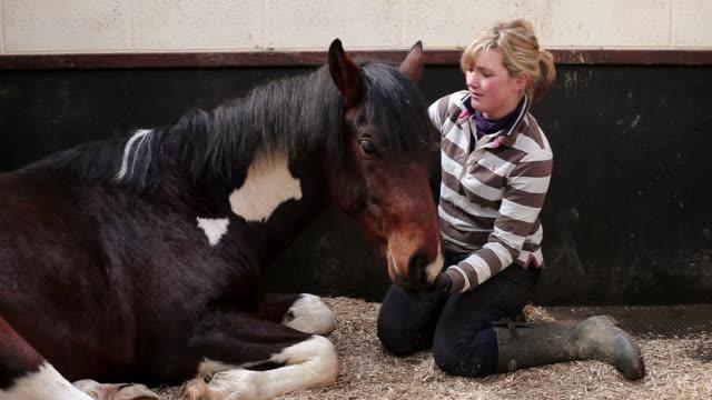 vídeos de stock, filmes e b-roll de ms stable hand petting horse lying down / helland, bodmin, cornwall, united kingdom - acariciando
