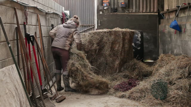ms stable hand putting hay in feed bags / helland, bodmin, cornwall, united kingdom - hay stock videos and b-roll footage
