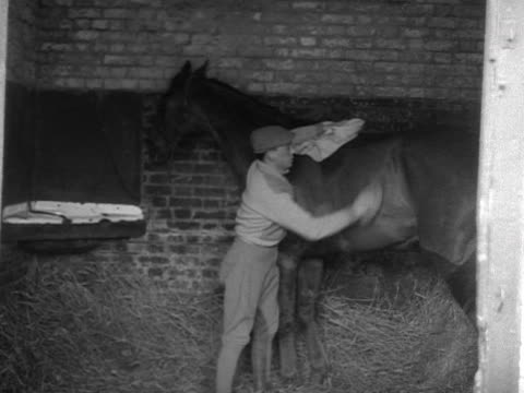 a stable lad rubs down a race horse in its stable - pferdestall stock-videos und b-roll-filmmaterial