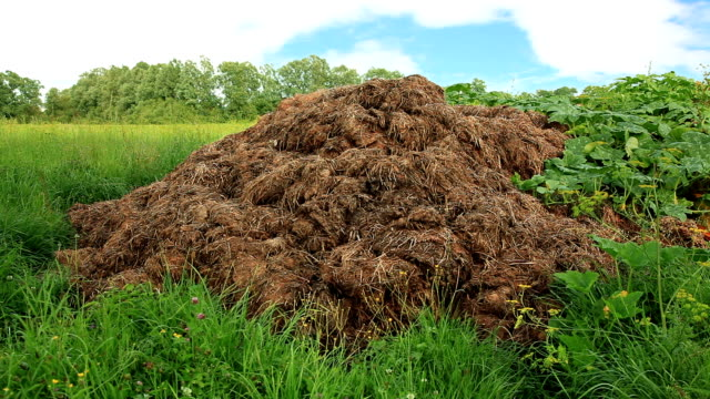 hd - stable manure - organic stock videos & royalty-free footage