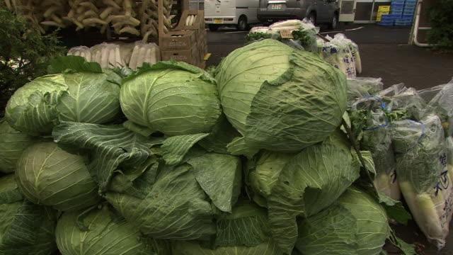 a stack of cabbage, hokkaido, japan - アブラナ科点の映像素材/bロール