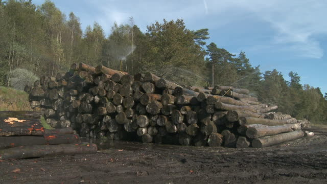 ws stack of logs at sawmill being sprayed against ageing / virton, luxemburg, belgium - lumberyard stock videos and b-roll footage