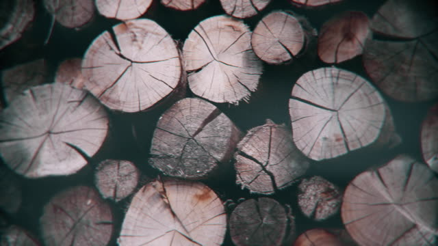 stack of logs ready to be burned - reforestation stock videos and b-roll footage