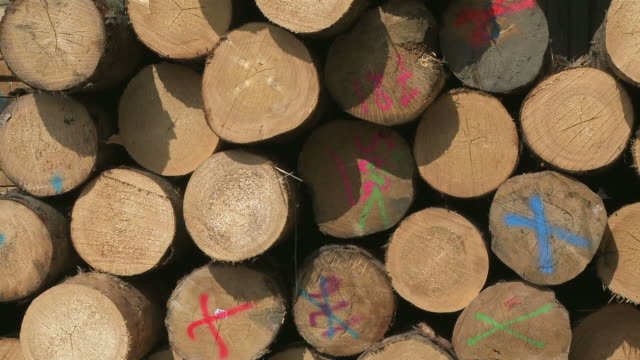 cu stack of logs with colourful markings in sawmill / trier, rhineland-palatinate, germany - lumberyard stock videos and b-roll footage