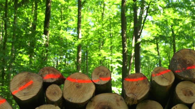 vídeos de stock, filmes e b-roll de hd pilha de madeira na spring forest dolly foto (4:2: 2) - faia árvore de folha caduca