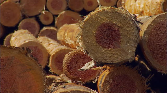 cu, tu, stack of wood logs in green valley, portland, oregon, usa - bauholz stock-videos und b-roll-filmmaterial
