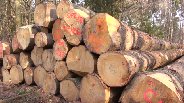 CU stack of woods in forest / Orscholz, Saarland, Germany