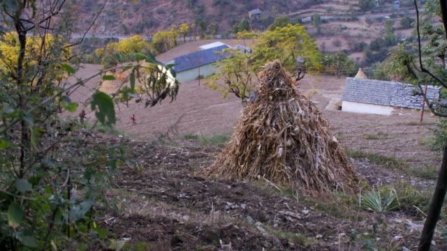 vídeos y material grabado en eventos de stock de stacked corn stalks on farm land - tallo