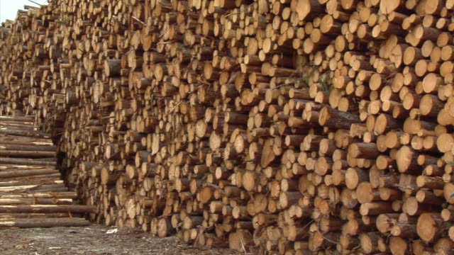 CU, PAN, Stacked timber logs in storage yard, Manistique, Michigan, USA