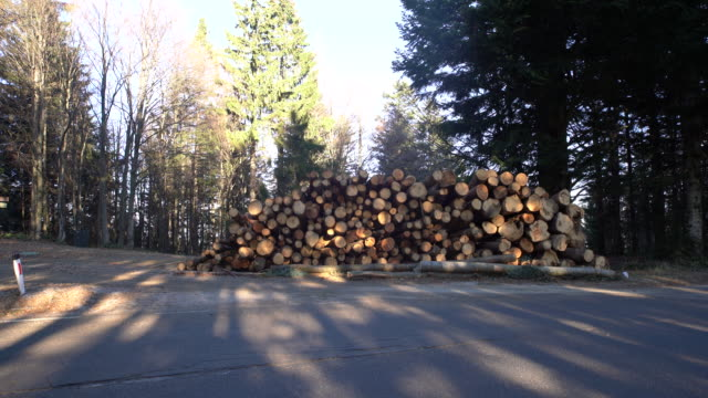 ds stacked wood logs - timber stock videos and b-roll footage