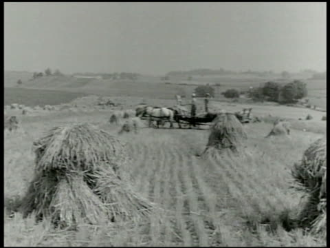 vídeos de stock, filmes e b-roll de stacks of grain standing in field male driving open wagon bg foreman directs three men walking w/ boxes of produce on shoulders american refrigerator... - 1943