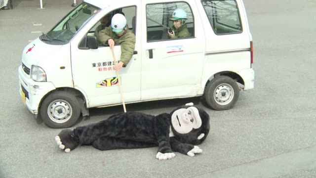 Staff at a Japanese zoo chase a keeper in a gorilla costume as part of an annual escape drill to brush up their skills in the event of a real...