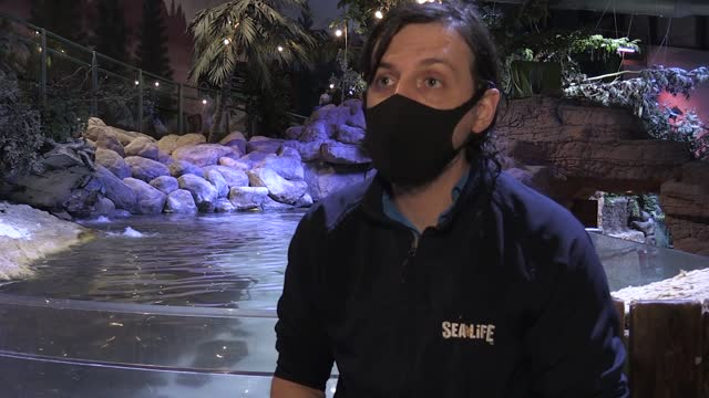 staff at the national sea life centre carry out maintenance work while the birmingham attraction is closed to the public. throughout lockdown, the... - chores stock videos & royalty-free footage