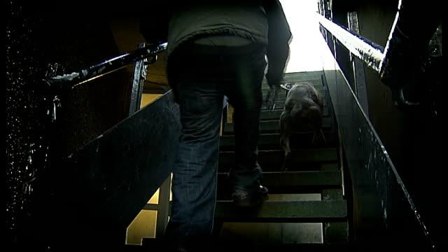 vídeos de stock, filmes e b-roll de staffordshire cross terrier dog with owner in street - terrier