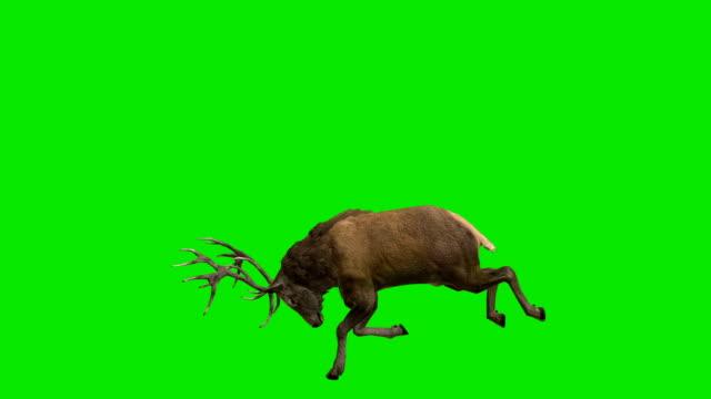 シカ角緑色の画面 - 牡鹿点の映像素材/bロール