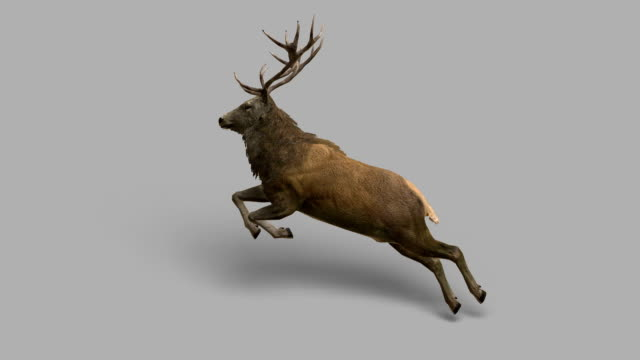 stag jumping with alpha channel (loopable) - deer stock videos & royalty-free footage