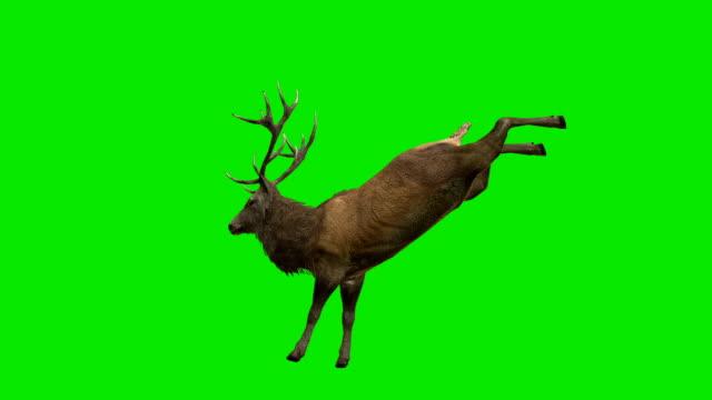 stag sparka grön skärm (loopable) - vaja bildbanksvideor och videomaterial från bakom kulisserna