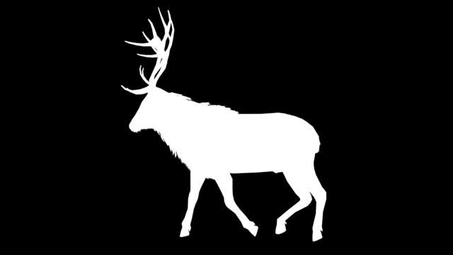 stag walk silhouette (loopable) - deer stock videos & royalty-free footage