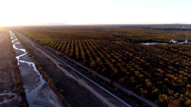 stahman farms pecan orchards in mesilla valley nm. - orchard stock videos & royalty-free footage