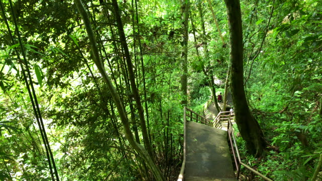 staircase ladder in forest - footbridge stock videos & royalty-free footage