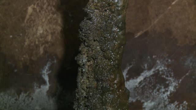 vídeos de stock, filmes e b-roll de stalactite forming on tempurung  cave, kl - stalactite