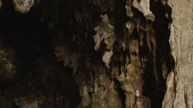 vídeos de stock, filmes e b-roll de stalactites in cave with rocks and vegetation, new caledonia, 2013 - stalactite