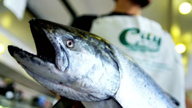 vídeos de stock, filmes e b-roll de stall displaying sea salmon pikes fish market seattle - pike place market