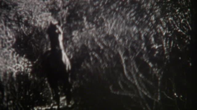 stallion old west 1920's - stallion stock videos & royalty-free footage
