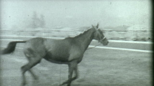 stallion training 1930's - 1900 stock videos & royalty-free footage