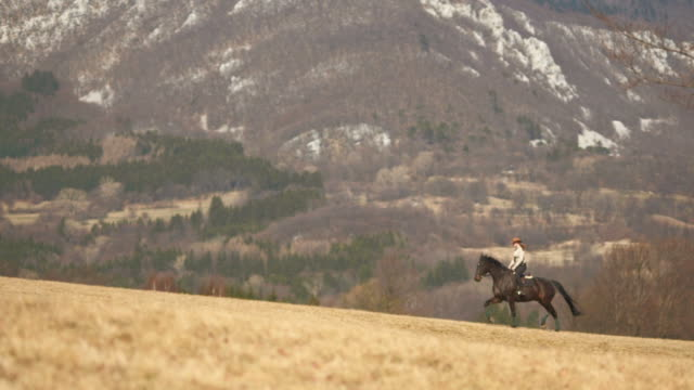 hd: stallion trotting in meadow - recreational horse riding stock videos & royalty-free footage