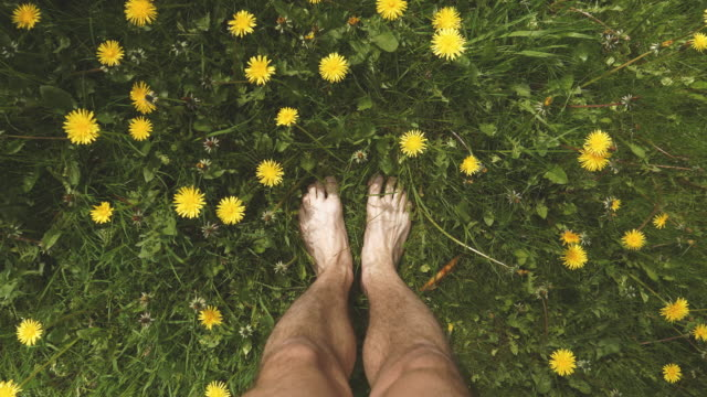 standing barefoot among dandelion - grass stock videos & royalty-free footage