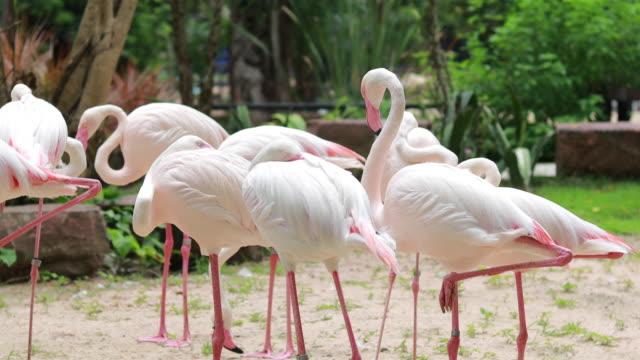 stående flamingo i zoo - djurbeteende bildbanksvideor och videomaterial från bakom kulisserna