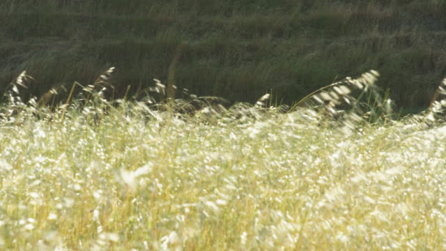 standing in the tall grass on a windy day - idyllic stock videos & royalty-free footage