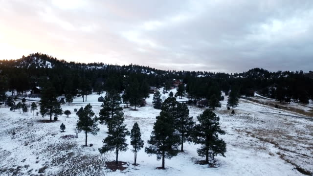 Stands of Pine Trees in Snowy Landscape in Colorado