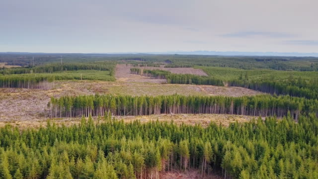 Stands of Surviving Trees Among Harvested Forest - Aerial