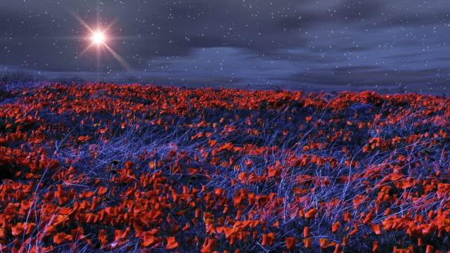 a star shines over windy poppy fields at night. - digitale verbesserung stock-videos und b-roll-filmmaterial