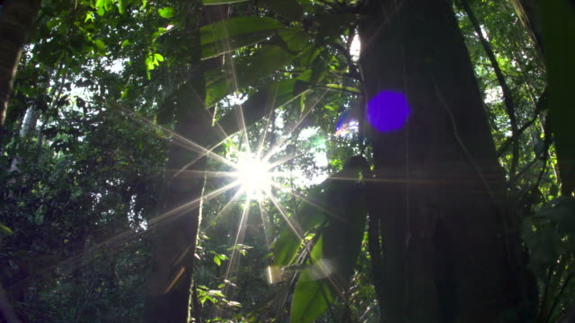 Starburst sunshine peaking through rainforest understory, 4k wide rear slide