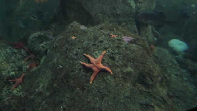 starfish clings to a rock - ヒトデ点の映像素材/bロール