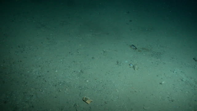 A starfish crawls over a barren seabed. Available in HD.