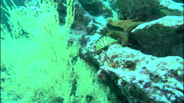 a starfish hangs over the craggy edge of a rock as fish swim nearby. - sea grass plant video stock e b–roll