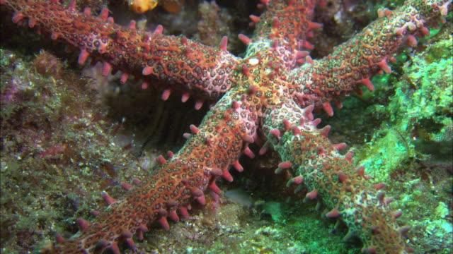 Starfish Macro with lights, Mexico