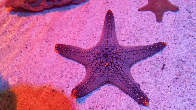 seestern im aquarium - tropisch stock-videos und b-roll-filmmaterial