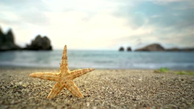 Starfish On The Beach - 4K Resolution