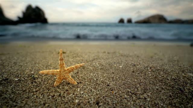 vidéos et rushes de étoile de mer sur la plage - résolution 4k - vue du sol