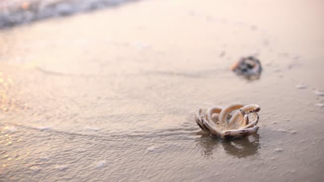 vidéos et rushes de étoile de mer sur la plage avec le coucher du soleil - rivage