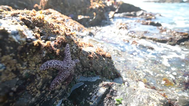 starfish with mussels on tidepool rock in enderts beach california national park - tide pool stock videos & royalty-free footage