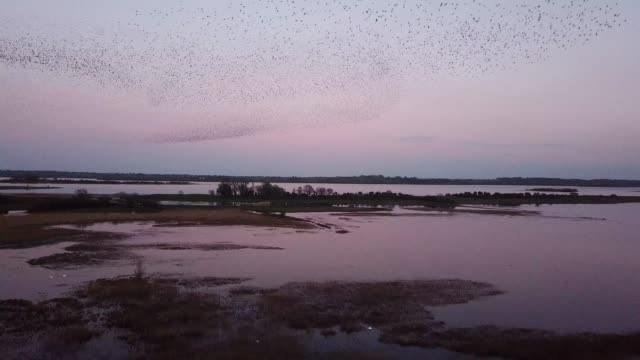 starling flocks making patterns in the sky above lough runny, county roscommon, ireland. - skill stock videos & royalty-free footage