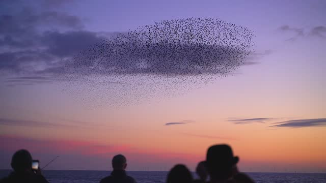 starlings flocking together at sunset - horizon over water stock videos & royalty-free footage